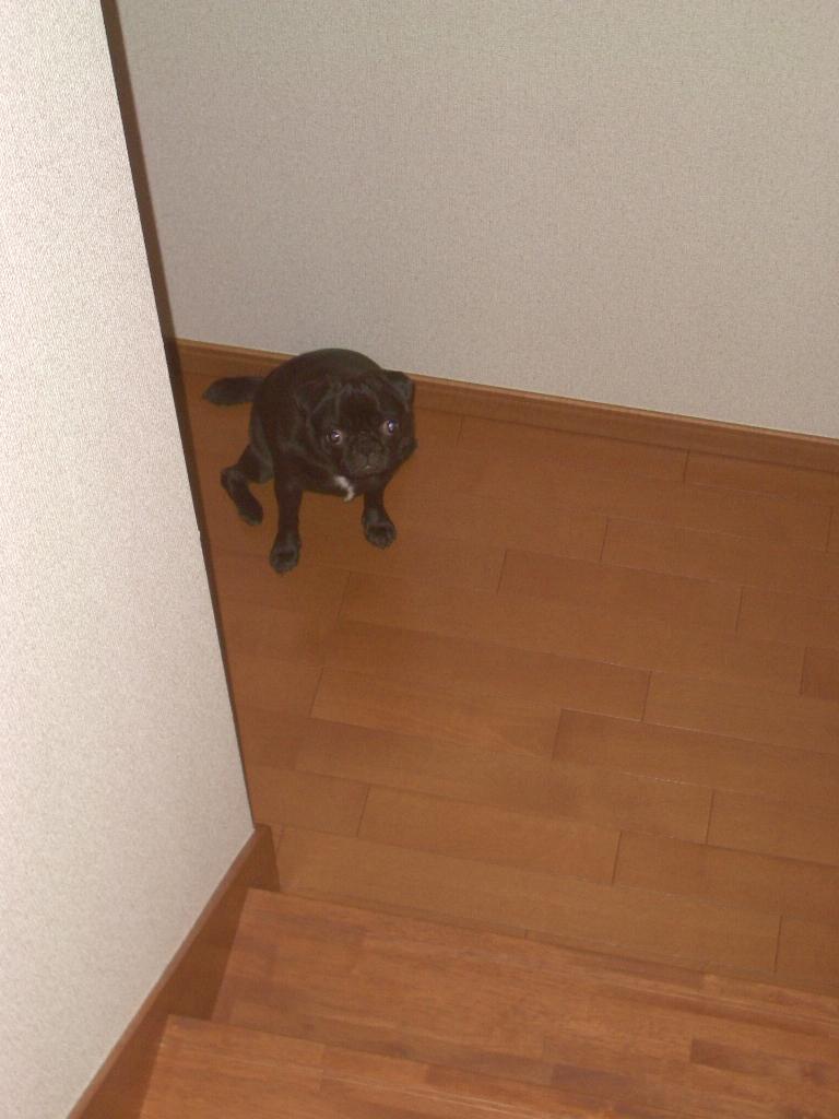 Imgp2008_1
